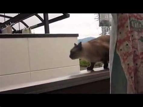 chat saute dun balcon fail youtube