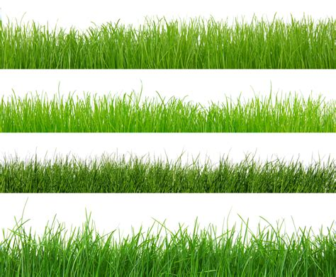 Which Type Of Grass Is Right For Your Kansas