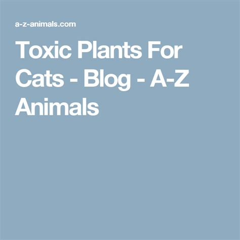 plants cats toxic animals