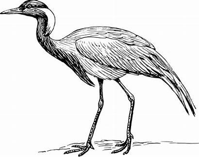 Crane Bird Clipart Demoiselle Clip Drawing Japanese