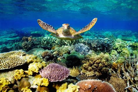 Animated Coral Reef Wallpaper - coral reef wallpapers wallpapersafari