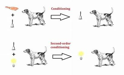 Conditioning Order Second Higher Psychology Classical Conditioned