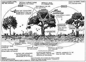Fruit Tree Guild Diagram Bill Mollison  The Following Link