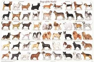 Dog Breeds Poster  61x91cm  Veterinary Educational Wall Chart Diagram Licensed