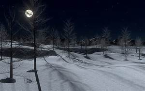 Beautiful, Winter, Midnight, Snow, Trees, Full, Moon, Forest