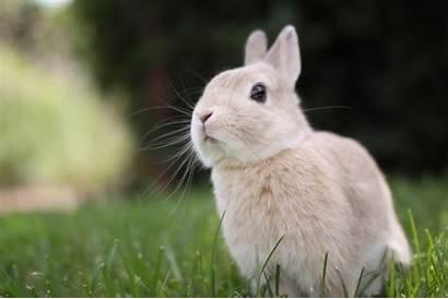 Rabbit Wallpapers Desktop Rabbits Bunny 4k Theme