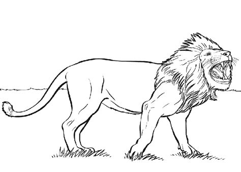 wild animal lion king   jungle coloring pages
