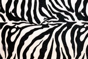 Amper Bae: zebra print backgrounds