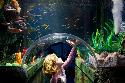 sea aquarium prices sea melbourne aquarium prices discount tickets