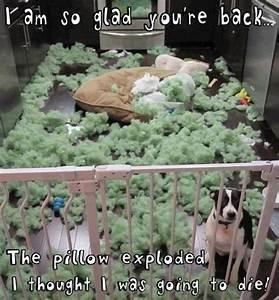 Wenn Kissen einfach so explodieren - Dog and the exploded ...