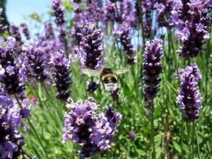 Welche Pflanzen Gegen Wespen : pflanzen gegen katzen verpiss dich pflanze blumen und ~ Lizthompson.info Haus und Dekorationen