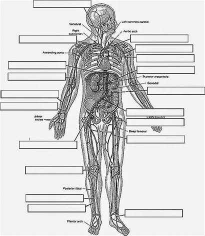Anatomy Physiology Coloring Pages Workbook Printable System