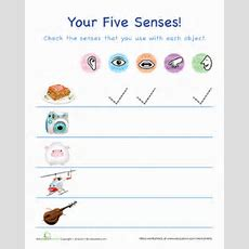 The Five Senses!  Worksheet Educationcom