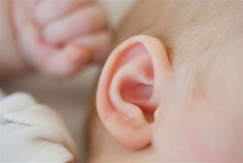 si鑒e bebe hear this 2017 scientists are creating ears with 3d printing and human stem cells science smithsonian