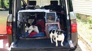 Cage Transport Chien Voiture : conseils pour voyager en voiture avec votre chien ou chat ~ Medecine-chirurgie-esthetiques.com Avis de Voitures