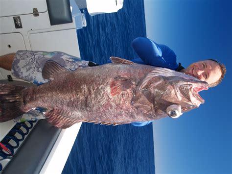 cod bass grouper species target fishwrecked wa
