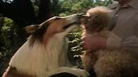The Magic of Lassie (1978) - Where to Watch It Streaming ...