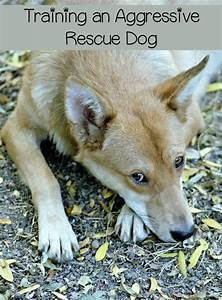 dog aggression how to train a difficult dog dogvills With aggressive dog training tips
