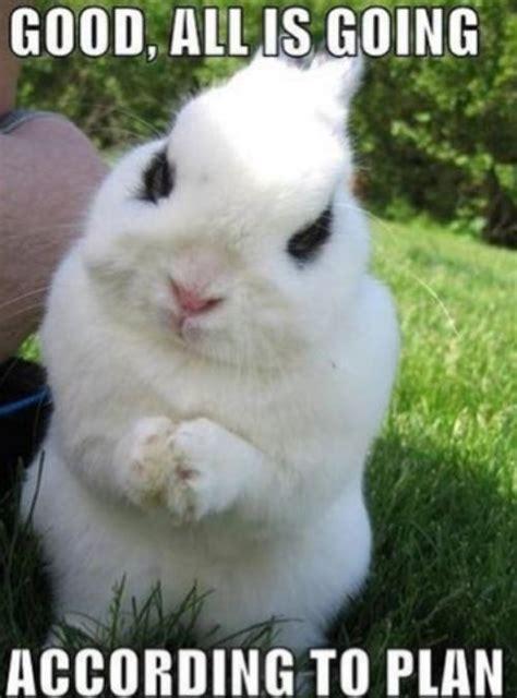 Bunny Meme - bunny rabbits as pets memes