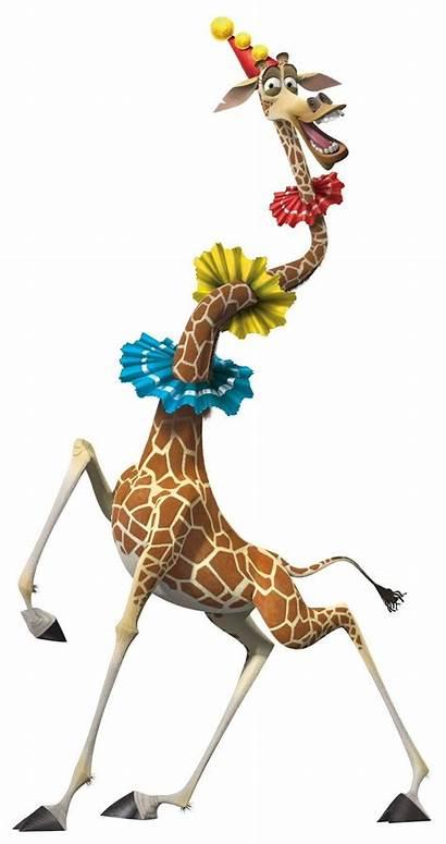 Madagascar Melman Giraffe Cartoon David Zoo Schwimmer