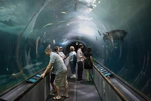 SILICONEER | TRAVEL: Ballet of Marine Life: Aquarium of ...