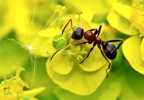 Ameisen Im Garten Was Gegen Ungebetene Krabbler Hilft