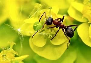 Was Mögen Ameisen Nicht : ameisen im garten was gegen ungebetene krabbler hilft ~ Orissabook.com Haus und Dekorationen