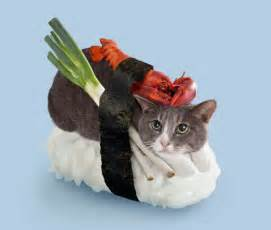 japanese cat cats as sushi a japanese ad series