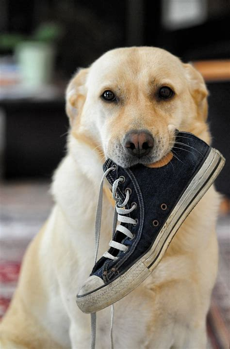 dog friendly retail chains  stores