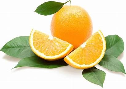 Citrus Florida Showcase Oranges Central