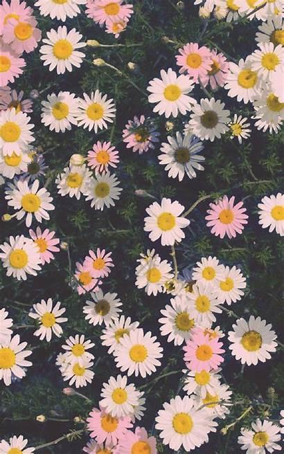 Iphone Flower Wallpapers 4k
