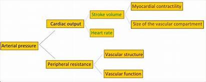 Diagram Arterial Pressure Hypertension Essential Physiology Disease