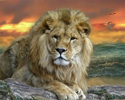 Free Cool Wild Animal Wallpapers « Long Wallpapers