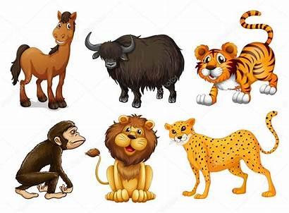 Diferentes Patas Tipos Quatro Animais Vetor Ilustracao