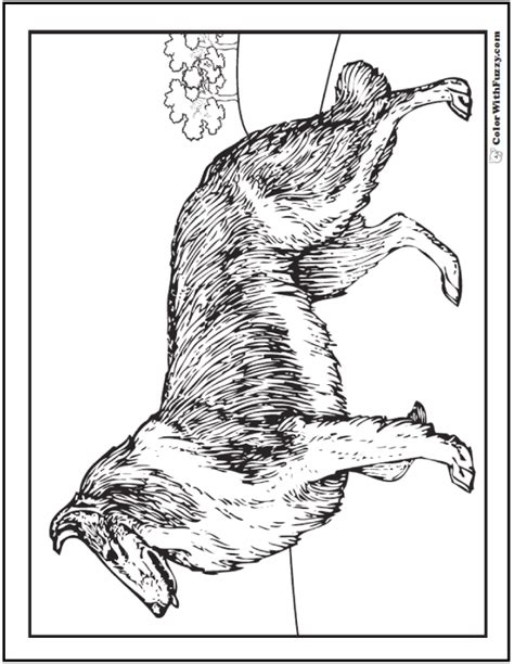 dog coloring pages breeds bones  dog houses