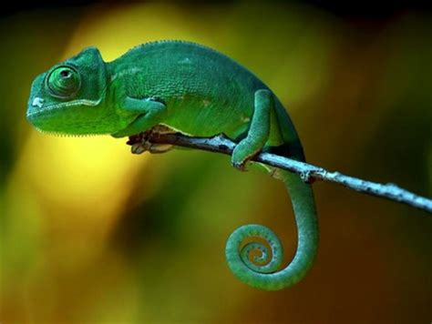 Green Animal Wallpaper - green animal other animals background wallpapers on