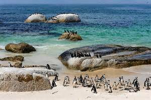 Penguin Beach Cape Town South Africa