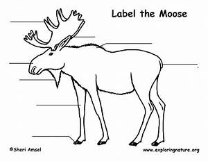 Moose Labeling Page