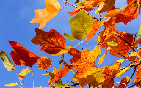 Colourful Autumn Background by Colorful Autumn Leaves Wallpapers And Images Wallpapers