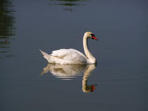 images wing reflection beak fauna vertebrate