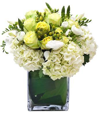 fiori catalogo faxiflora 174 catalogo fiori a domicilio