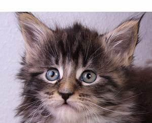 Katze Erbricht Oft : der einfachste weg zum perfekten futter ern hrung von katzen ~ Frokenaadalensverden.com Haus und Dekorationen