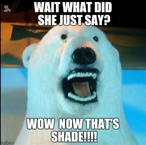 Horrified Meme - horrified polar bear imgflip