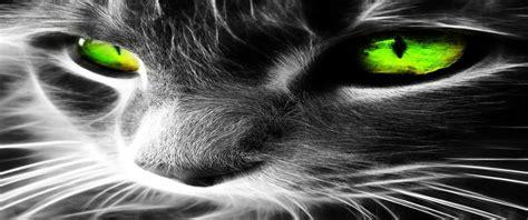 es  gato contrainfocom