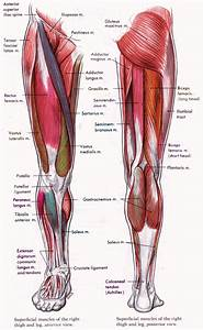 Studying The Human Body Part 3  Legs  Feet And Heads
