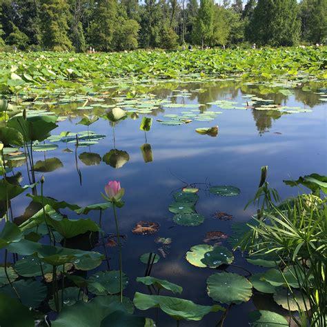 kenilworth aquatic gardens kenilworth aquatic gardens adventures in dc