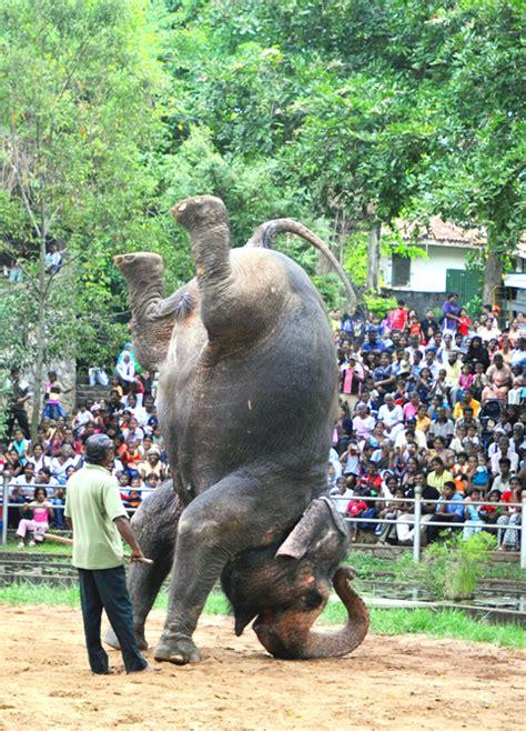 zoological garden  sri lanka