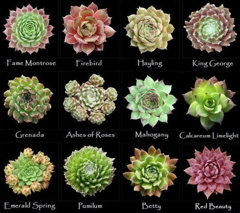 types of succulent plants assorted types of succulents 5 in the garden pinterest gardens plants and cacti