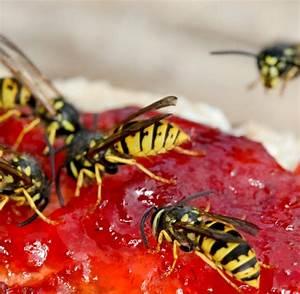 Was Hält Wespen Fern : basilikum wespen vertreiben wespe nahaufnahme auf holz neuigkeiten wespe wespen loswerden ~ Whattoseeinmadrid.com Haus und Dekorationen