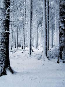 Snow Backgrounds Pictures - Wallpaper Cave